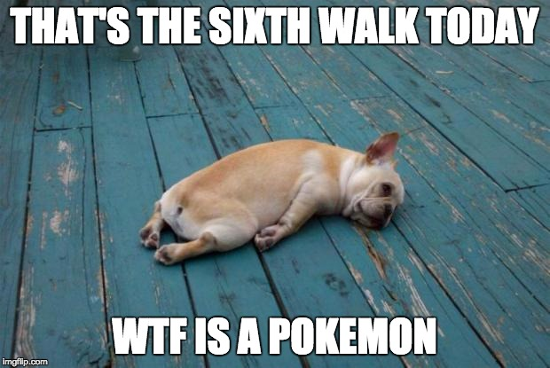 pokemongofordogs